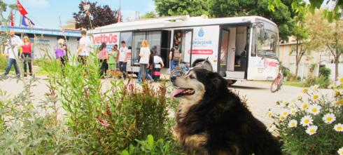 """بلدية إسطنبول الكبرى تطرح خدمة الحافلة البيطرية"""" للعناية بحيوانات الشوارع"""