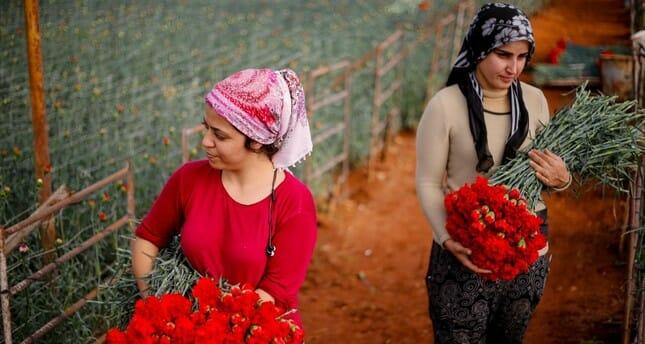 100 مليون دولار قيمة صادرات تركيا من الزهور في 2018