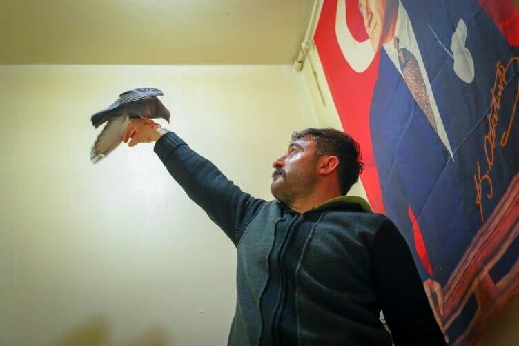 0x0 1554366547491 - طيور الحمام تستقبل الزبائن في مقهى تركي!