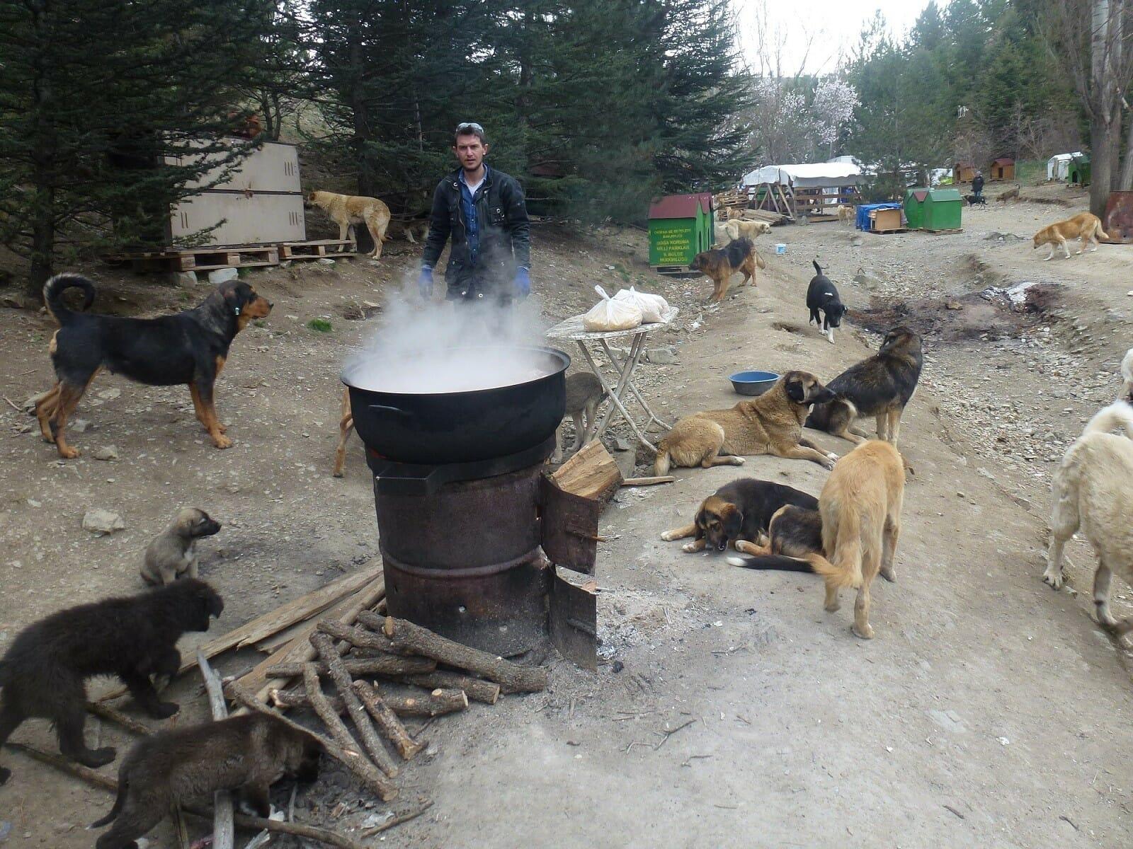 """34253 20170411aw036928 07 - """"باتي بارك"""".. مأوى يعتني بـ 500 كلب ضال في أنقرة"""