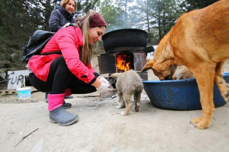 """""""باتي بارك"""".. مأوى يعتني بـ 500 كلب ضال في أنقرة"""
