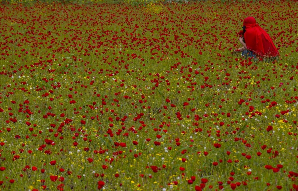 D3YUk5sWwAAF rK - أزهار الخشخاش تزين سفوح جبال الأمانوس التركية