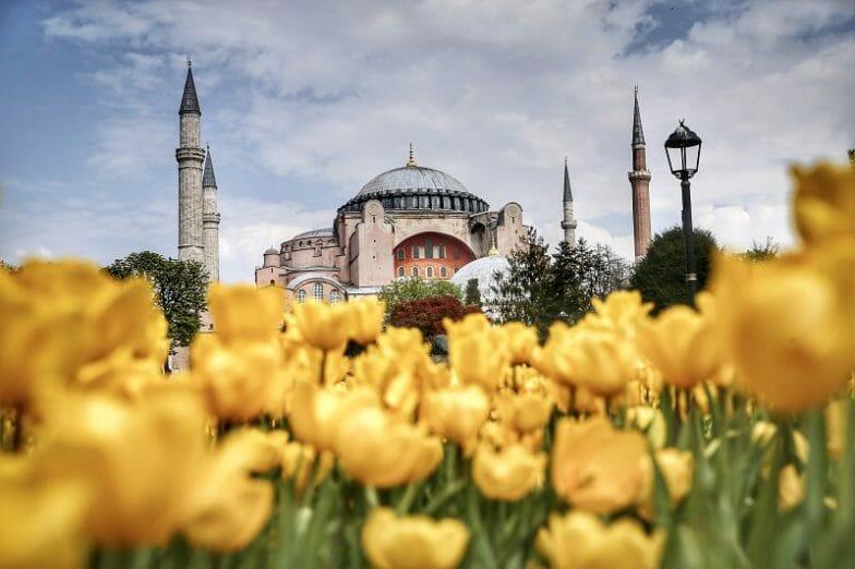 حدائق إسطنبول تتزين بأزهار التوليب ذات الألوان المبهجة