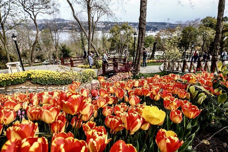 D3tMougXkAA bns - حدائق إسطنبول تتزين بأزهار التوليب ذات الألوان المبهجة