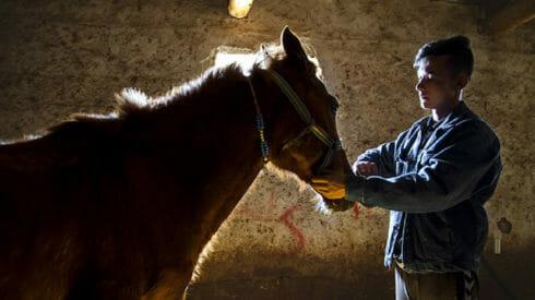 حب الخيول تتوارثه الاجيال عند تتار القرم