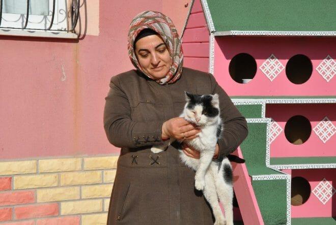 resimid 104035941 10403594 660x443 1 - أكواخ مقاومة للبرد.. ملاذ القطط في صورغون التركية