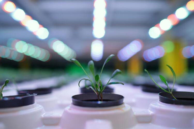 5e367177c9de3d1918b882be - أول مصنع في تركيا ينتج نباتات دون شمس ولا تربة