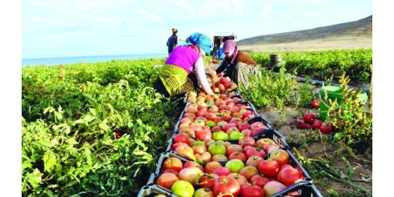 معرض رقمي للمنتجات الزراعية التركية