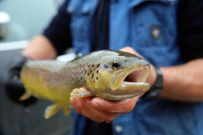 زيادة الطلب على سمك السلمون التركي بعد جائحة كورونا