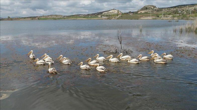 """تركيا.. طيور البجع تستمتع بالأجواء الهادئة في بحيرة """"إمره"""""""