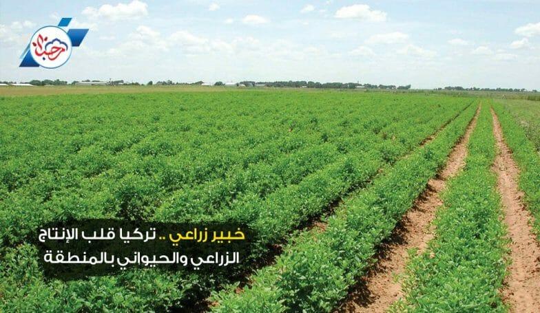 خبير زراعي.. تركيا قلب الإنتاج الزراعي والحيواني بالمنطقة