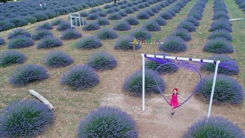 حقول اللافندر في تركيا.. عالم أرجواني ينتظر زواره