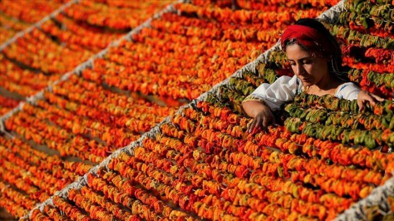 كعناقيد لؤلؤ.. الخضروات المجففة تزين تلال عنتاب التركية