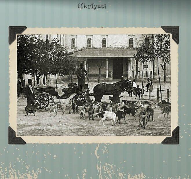 جمعية (حماية الحيوان) في الدولة العثمانية … أول جمعية من نوعها في التاريخ