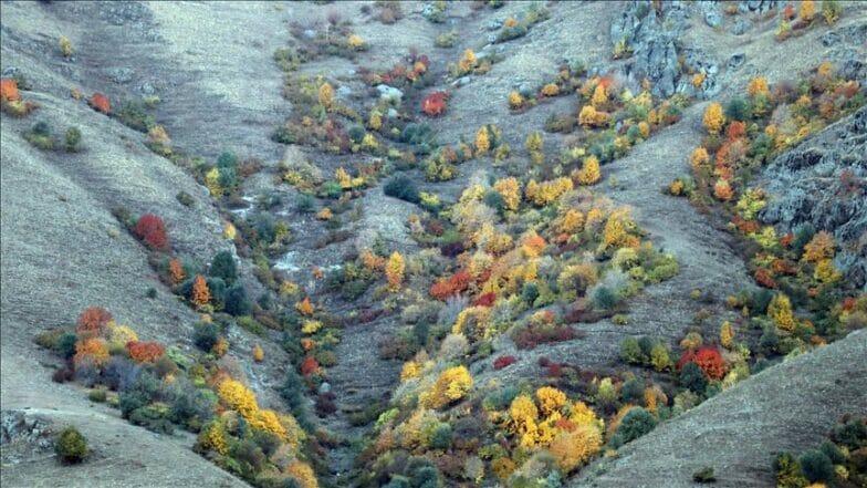 """جبال """"آغري"""" التركية.. خريف ملون ترسمه الأشجار"""