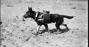زج الحيوانات في الحروب.. وسيلة غربية للتفوق في المعارك