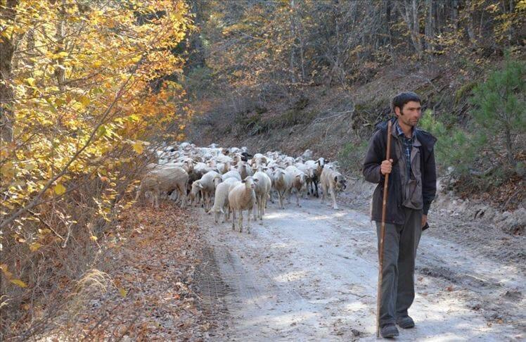 رحلة الشتاء والصيف.. عشيرة تركية من الهضاب إلى السهول