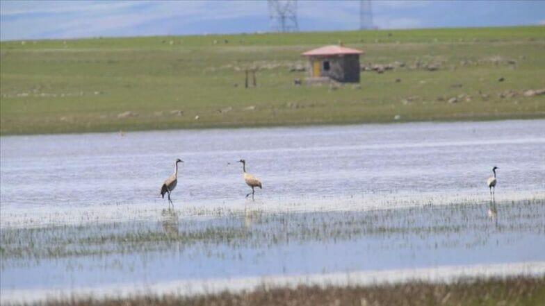 """""""بحيرة كويوجوك"""".. جنّة الطيور شمال شرقي تركيا"""