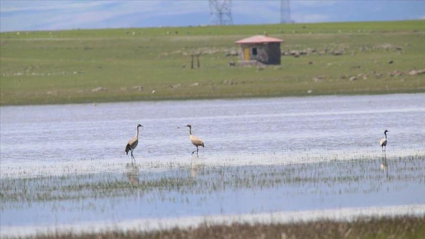 "thumbs b c 1f2a8ffccc4654dd9405fae38c320413 - ""بحيرة كويوجوك"".. جنّة الطيور شمال شرقي تركيا"
