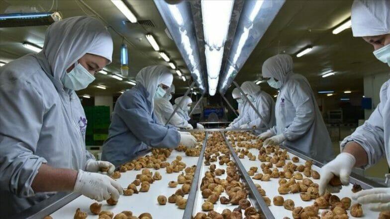 تركيا تجني 70 مليون دولار من صادرات التين المجفف