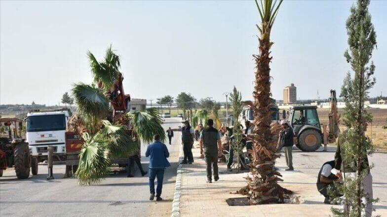 """تركيا تزرع 600 شجرة في منطقة """"نبع السلام"""" شمال سوريا"""