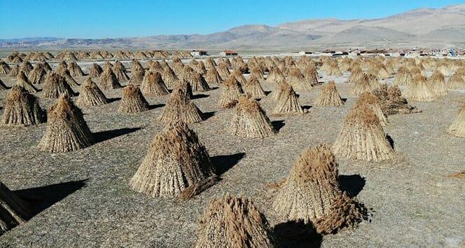 قرية تركية صغيرة تصدر منتجاتها بقيمة مليون دولار في خلال خمس شهور