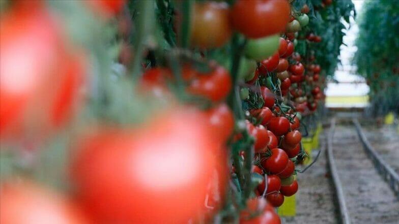 """صادرات """"منطقة إيجة"""" من الفواكه والخضروات تحطم رقما قياسيا"""