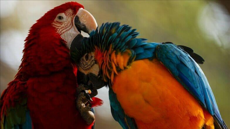 بألوان زاهية.. الببغاوات تخطف الأنظار بحديقة تركية للحيوانات