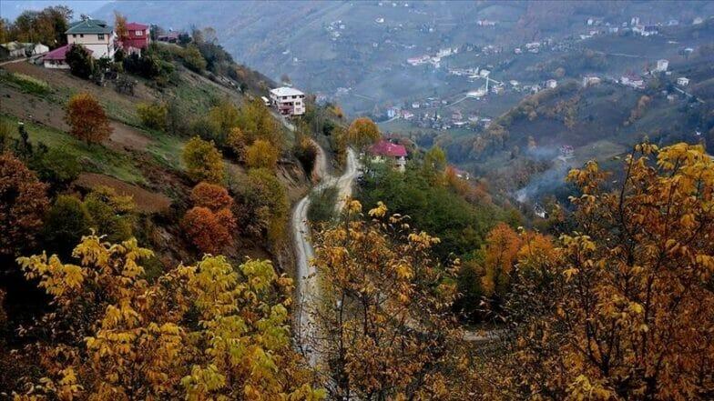 """""""فاو"""": تركيا الأولى أوروبيا في زراعة الأشجار"""