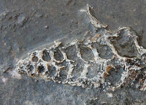 عثر على مستحاثّة عمرها 70 مليون سنة على قطعة صخرية