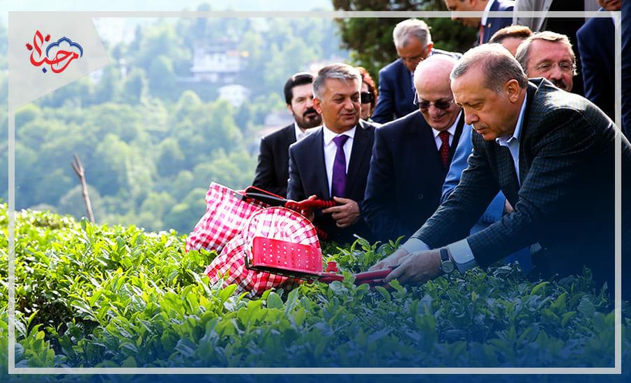 43ثص - الشاي التركي ثقافة شعب وعائد اقتصادي هام