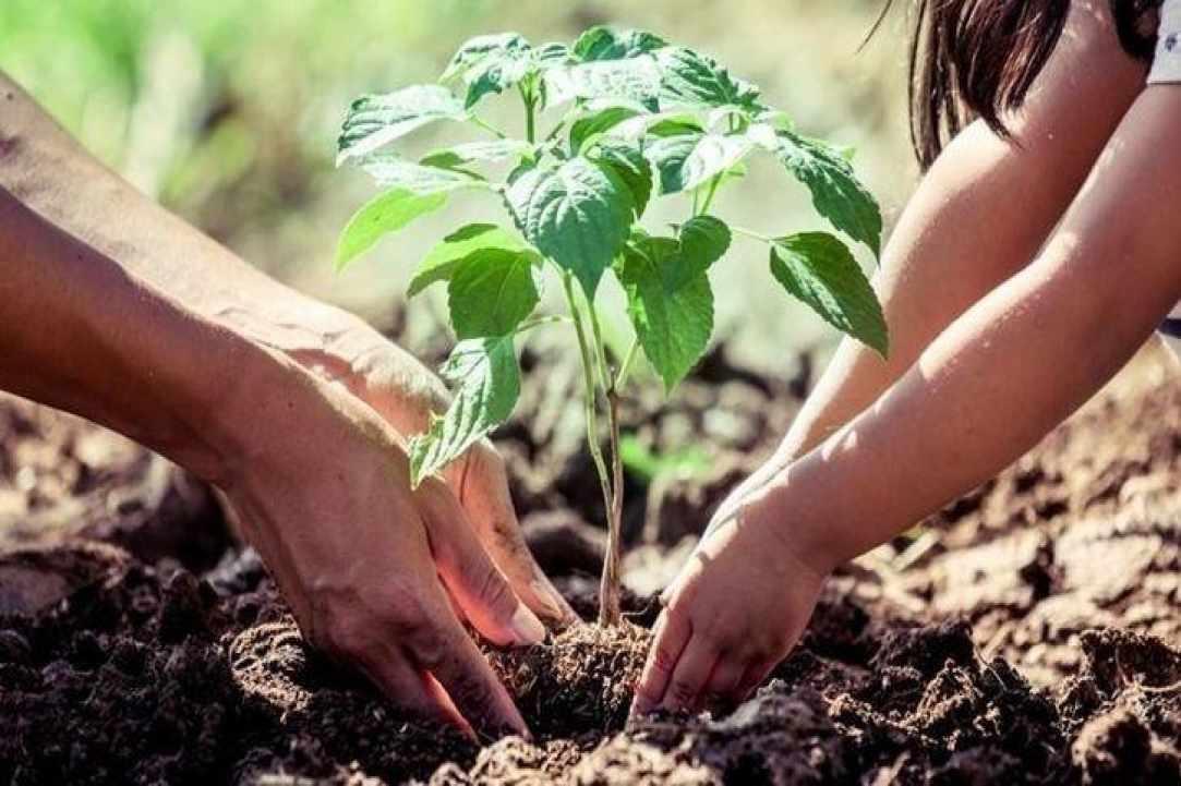 حملة نفس إلى المستقبل... ازرع شجرة باسمك في تركيا