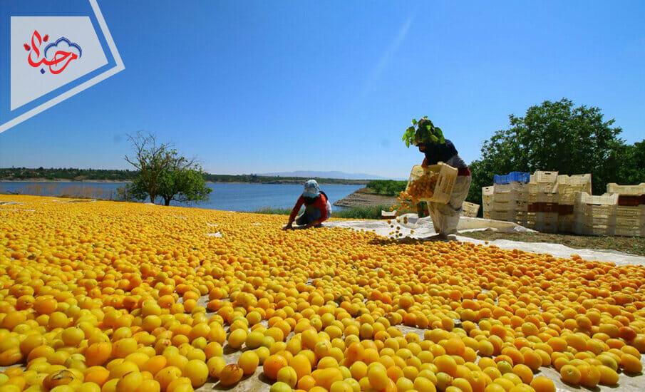 1 - التجارة الخارجية في تركيا.. عندما تكون الصادرات قاطرة للنمو