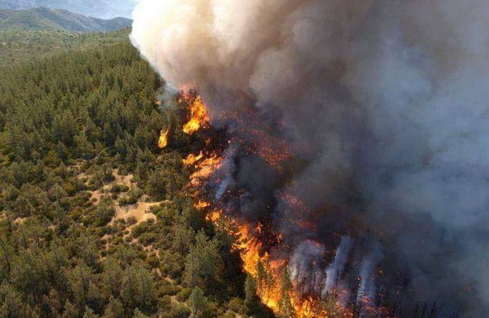 تركيا تعزي الجزائر في ضحايا حرائق الغابات
