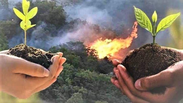 مرحلة التعافي | زراعة 100 مليون شتلة بعد حرائق الغابات في تركيا