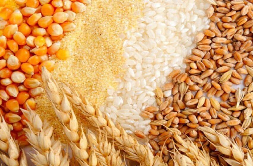 شركة تركية تنتج البذور في السودان